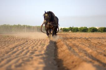 https://cf.ltkcdn.net/horses/images/slide/232359-850x567-farming-with-horse-power.jpg