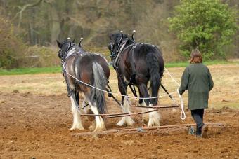 https://cf.ltkcdn.net/horses/images/slide/232361-850x567-peg-tooth-harrow.jpg
