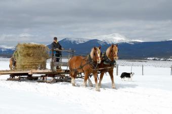 https://cf.ltkcdn.net/horses/images/slide/232362-850x567-sled.jpg