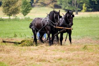 https://cf.ltkcdn.net/horses/images/slide/232365-850x567-mower.jpg