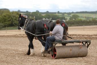 https://cf.ltkcdn.net/horses/images/slide/232367-850x570-field-roller.jpg