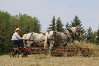 https://cf.ltkcdn.net/horses/images/slide/232369-850x567-wooden-buck-rake.jpg