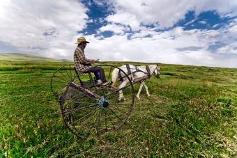 https://cf.ltkcdn.net/horses/images/slide/232370-850x567-metal-hay-rake.jpg
