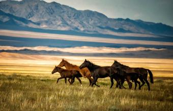 Life Cycle of a Horse: Stages and Care