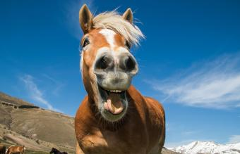 9 Funny Horse Show Videos
