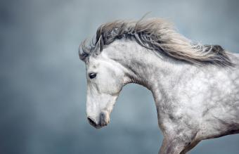 235 Famous Horse Names