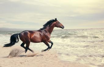 Horse Running On Shore At Beach