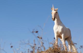 Unicorn on hilltop