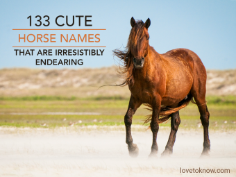 Wild horse on the Outer Banks with mane blowing in the wind