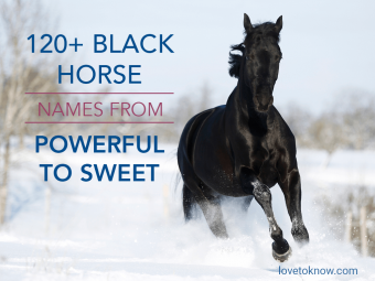 Black Horse Names From Powerful to Sweet