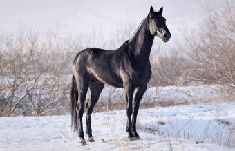 Black horse standing in pasture