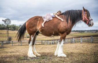 girl lying on huge Clydesdale horse