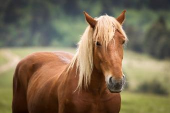 Female horse names with meaning