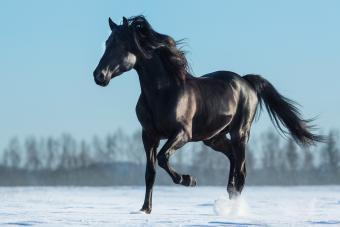 Spanish names for female horses