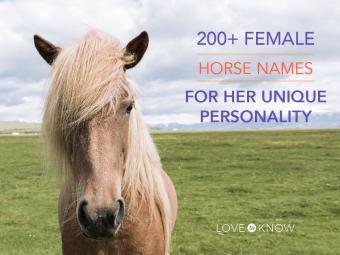200+ female horse names
