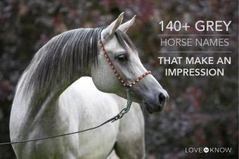140+ grey horse names that make an impression