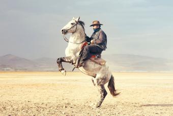 200+ Western Horse Names: Fun, Famous & Unique Ideas