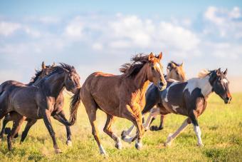 Wild horses running free