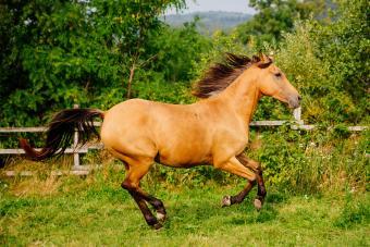 120+ Brilliant Buckskin Horse Names