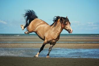 Buckskin horse at beach