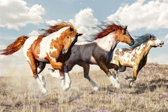 100+ Paint Horse Names as Distinctive as Your Horse