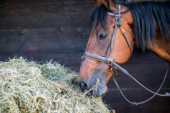 What Do Horses Eat? Simple Guide to a Healthy Horse Diet