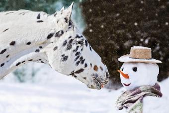 Appaloosa Horse with Snowman