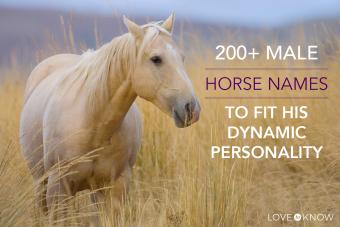 200+ male horse names