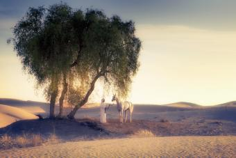 160+ Arabian Horse Names: Authentic & Adorable Ideas