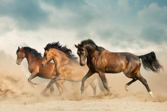 Beautiful horses running in the desert