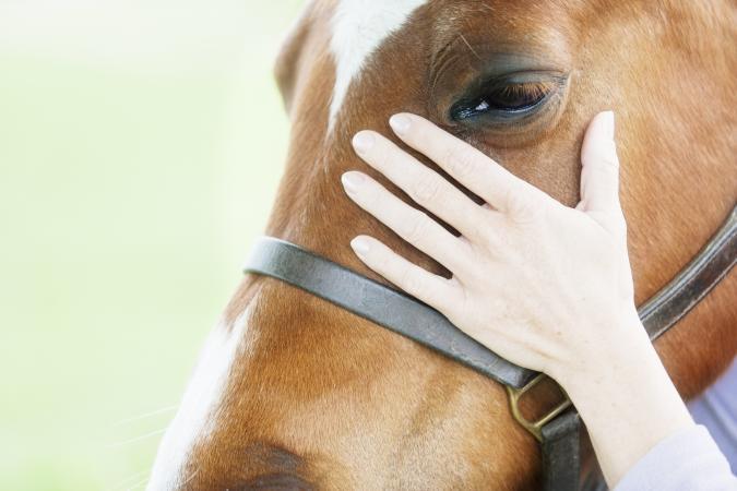 Woman petting horse