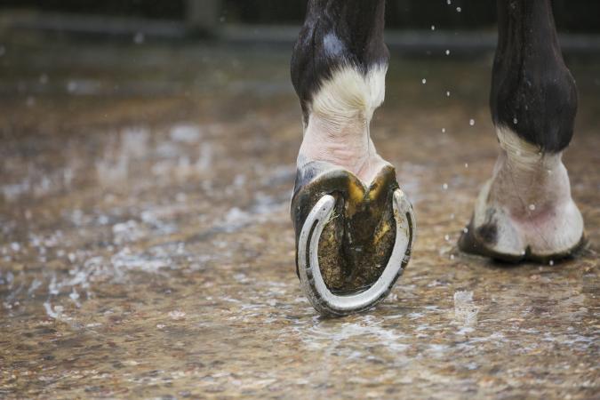Horses hoof