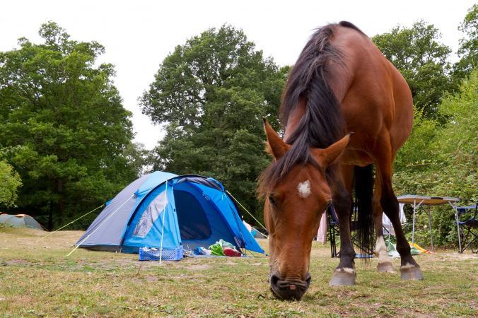 Horse grazing near campsite