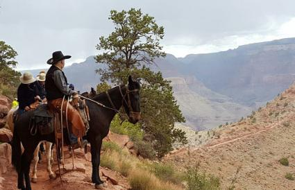 Riding horse trail