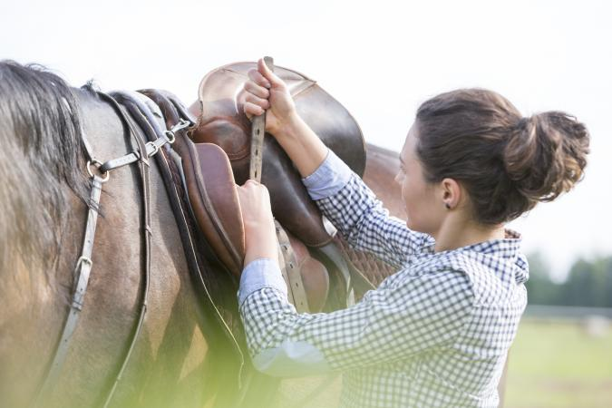 Woman tightening horse saddle