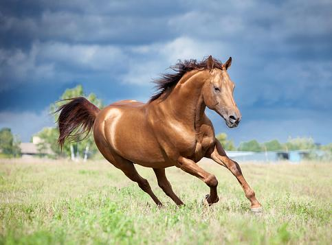 golden chestnut horse