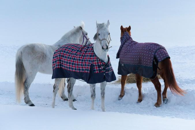 Horses covered in winter blankets