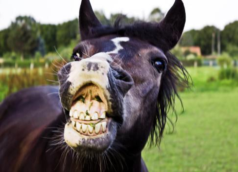Angry horse