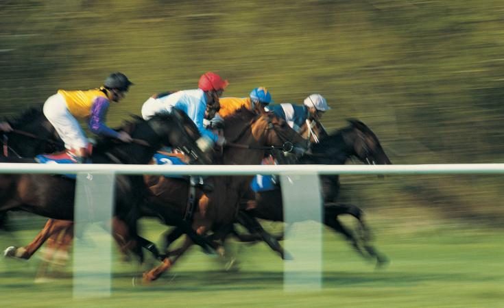 Horses in race