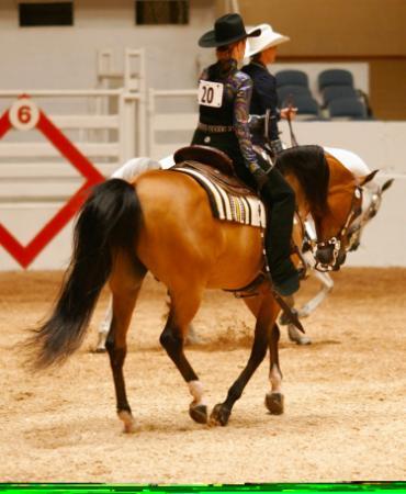 Western class horse show