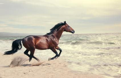 Horse Running On Shore At Beach