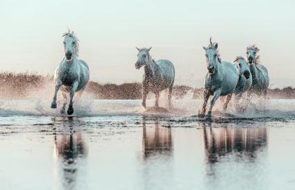 Wild White Horses