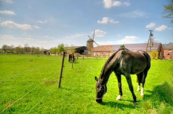 Equine Insurance Specialists