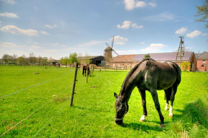 horse in pasture at farm location