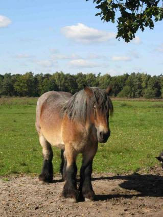 Some equine professionals may need liability insurance.