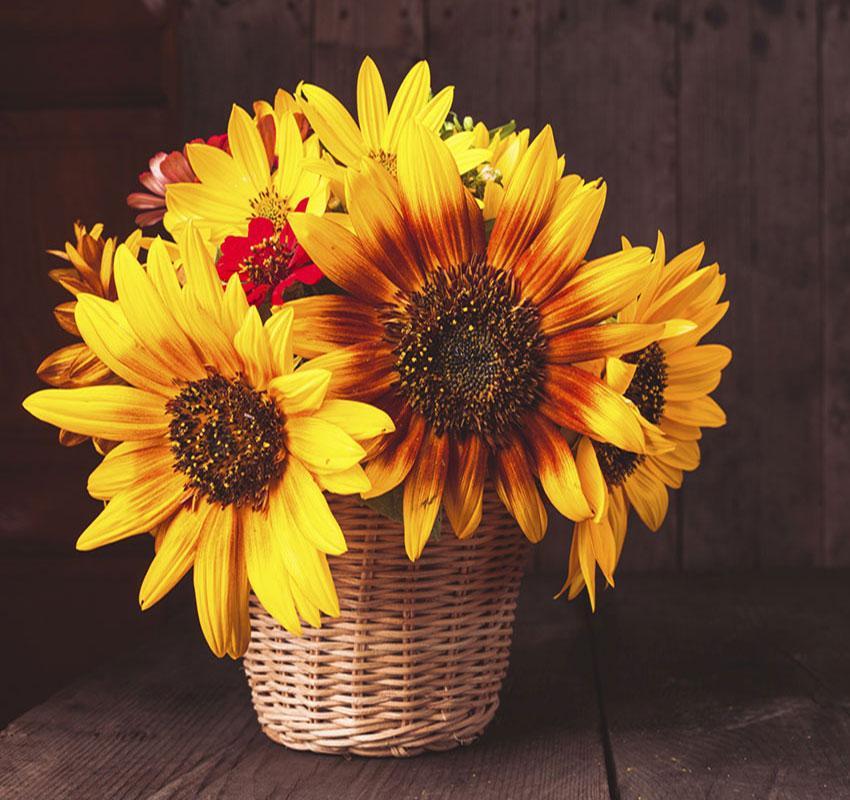 https://cf.ltkcdn.net/interiordesign/images/slide/189684-850x800-Autumn-flowers.jpg