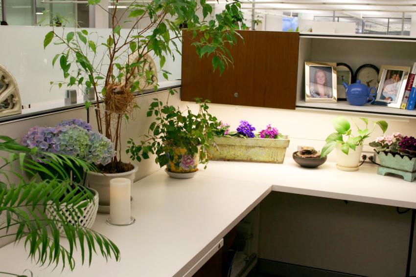 https://cf.ltkcdn.net/interiordesign/images/slide/209271-850x567-greenplantcubicle.jpg