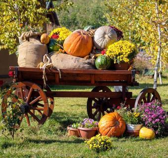 https://cf.ltkcdn.net/interiordesign/images/slide/189677-850x800-Thanksgiving-garden-decoration.jpg