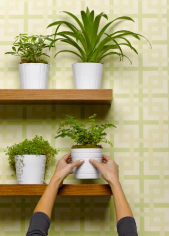 Cheap pots and shelving for big impact