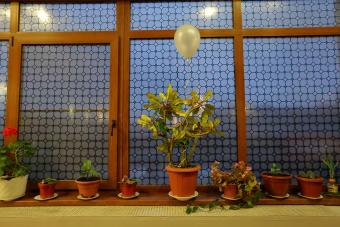 How to Use Different Types of Window Film Step By Step